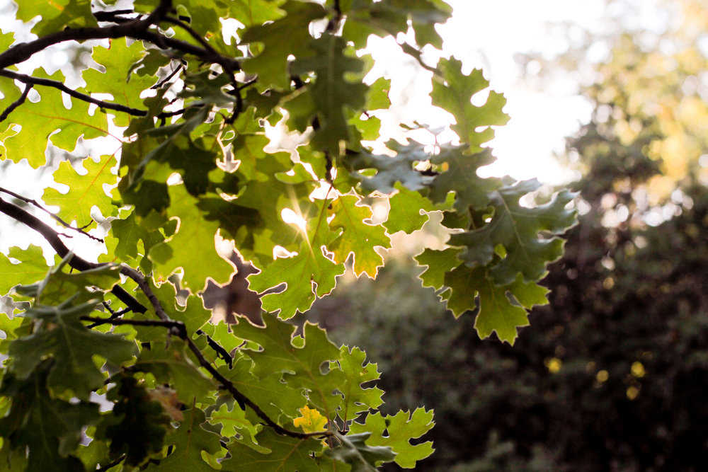 4 Gorgeous Deciduous Trees for your Cortlandt Manor Landscaping