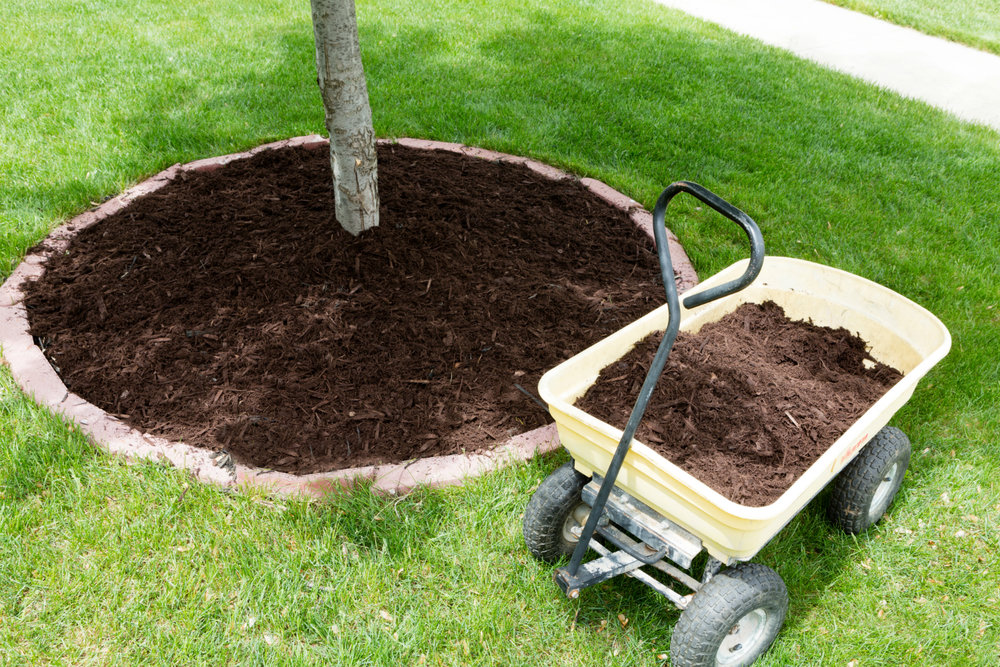 Mulch Volcanos: Why They're Doing Your Tree More Harm Than Good in Westchester County, NY