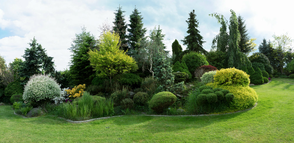 Evergreen Tree Landscape Ideas for Westchester County