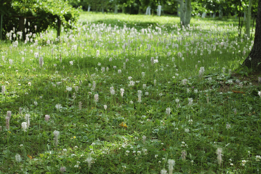 What the Most Common Weeds Say About the Condition of Your Somers, NY, Landscape