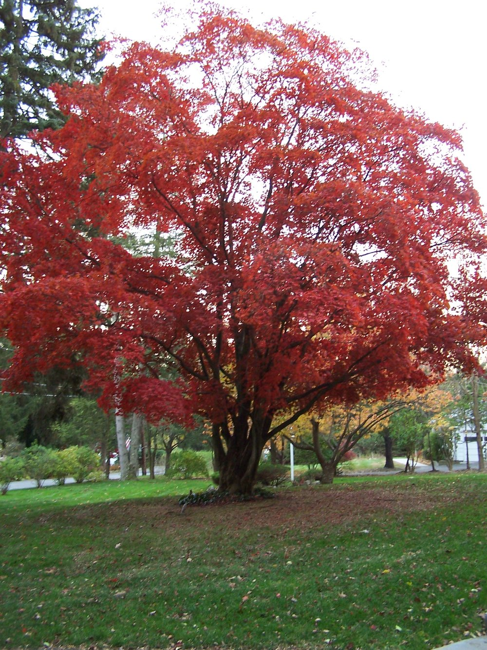 How a Landscape Company Can Help You Choose the Right Specimen Tree for Your Croton, NY, Yard