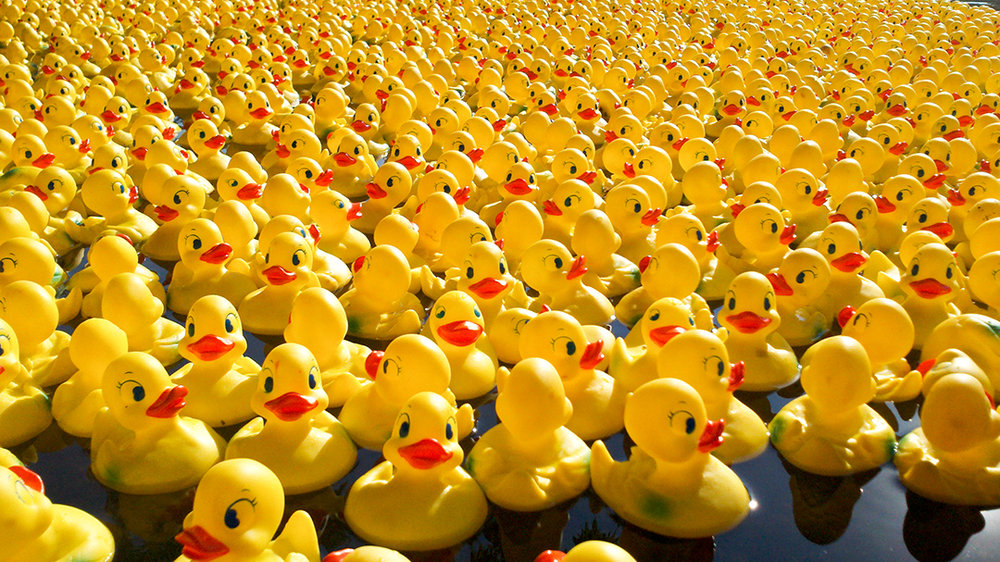 3 Rubber Duck Racing.jpg