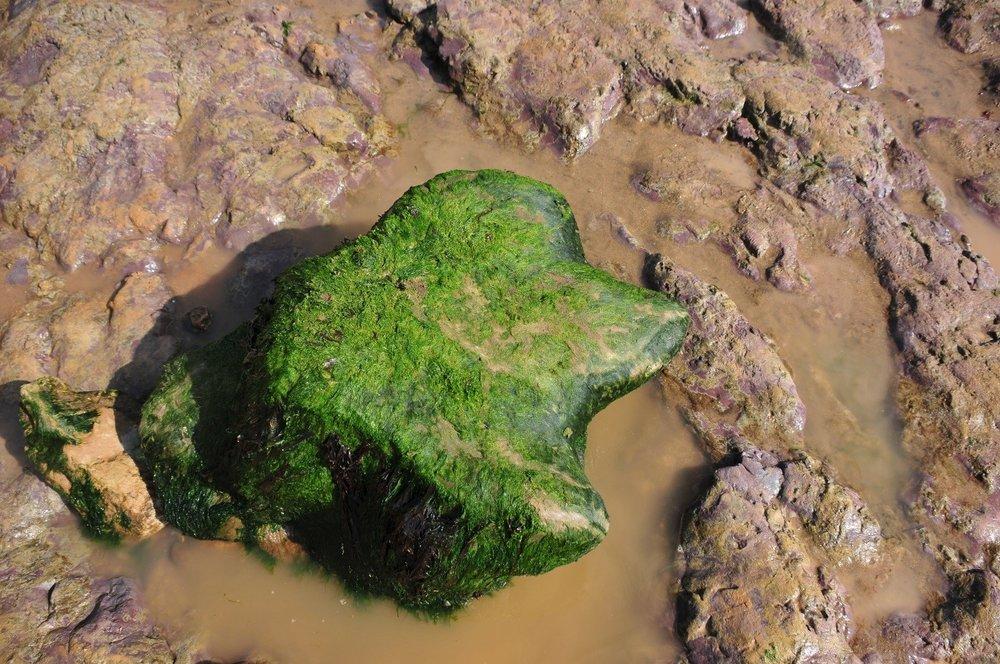 Fossils-rock-Sandown.jpg