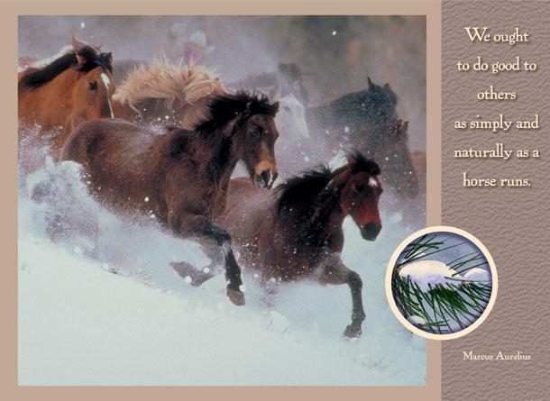 Christmas Horses.jpg