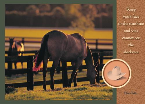 Pretty Western Horse copy.jpg