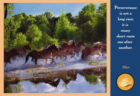 Horses Splashing in a Western River.jpg