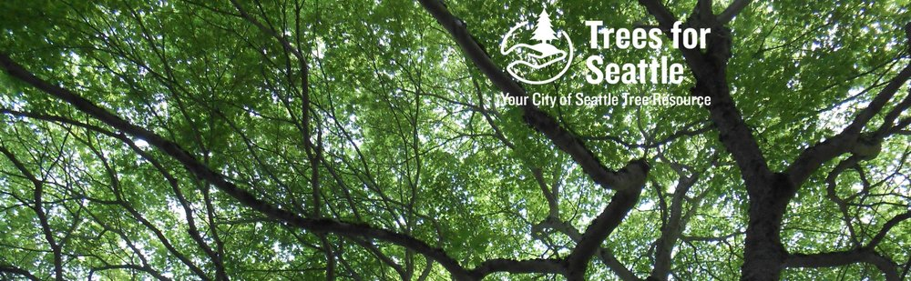 Trees for Seattle is the urban forestry task force for the City of Seattle.   |   Image via Trees for Seattle.