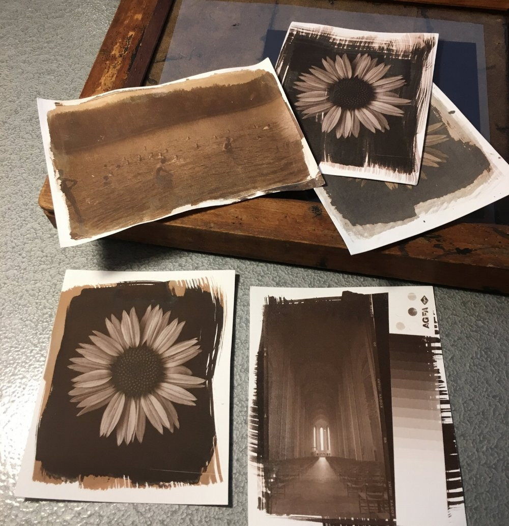 Salted Paper Print from digital, glass plate and 120 format Ilford negatives