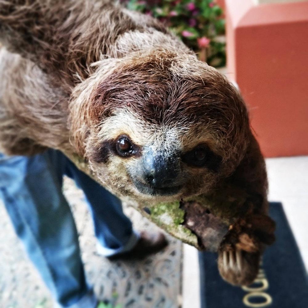 6.0_gallery_sloth.jpg