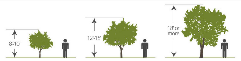 Fruit Tree Graphic - Dwarf. Semi-Dwarf. Standard.png