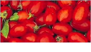 8454 - Roma Tomato.jpg