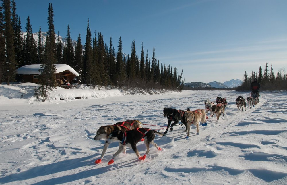 Nahtuk mushing.jpg