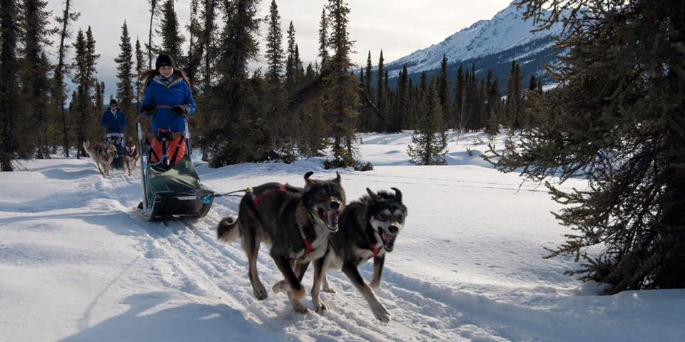 Mush your own small team of sled dogs! Everyone can do it.