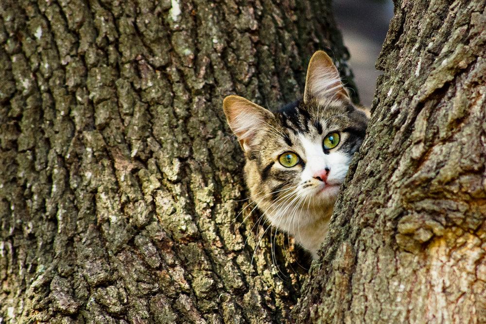 2013 Cats-8459.jpg
