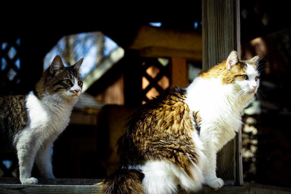 2013 Cats-8701.jpg