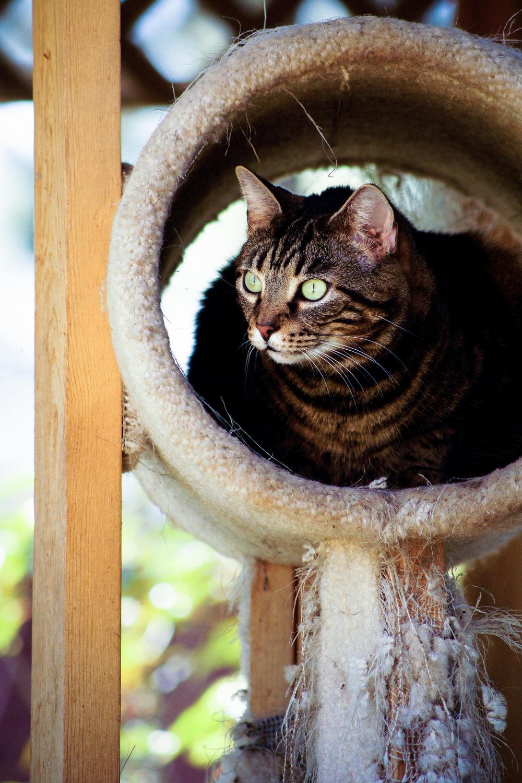 2013 Cats-8402.jpg