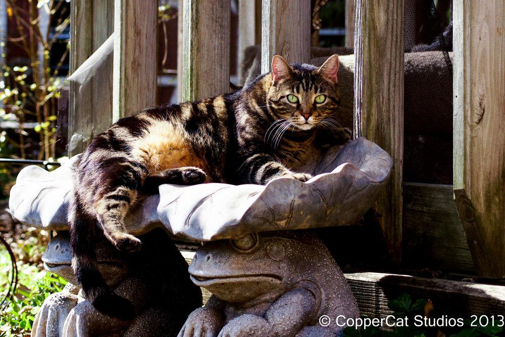 2013 Cats-8730.jpg