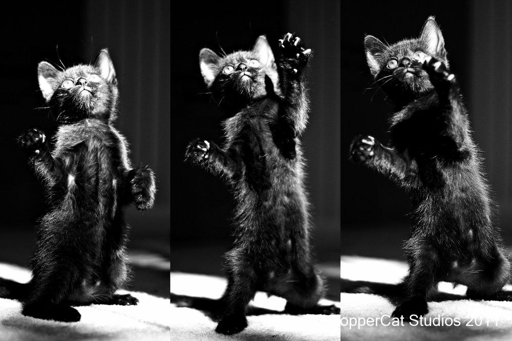 Dot-20110831-KittenComposite.jpg