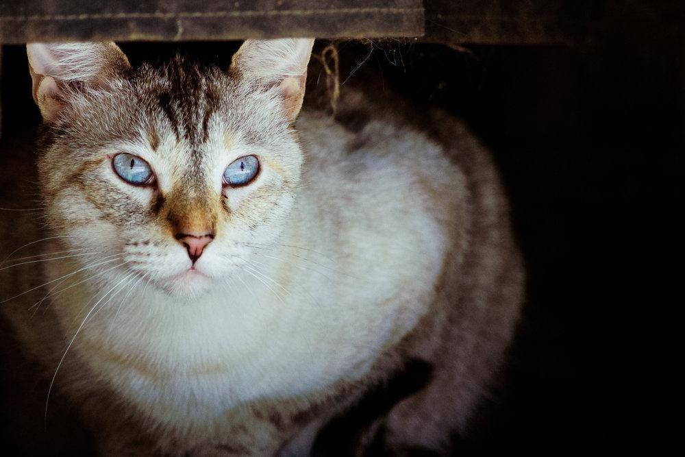 2013 Cats-7978.jpg