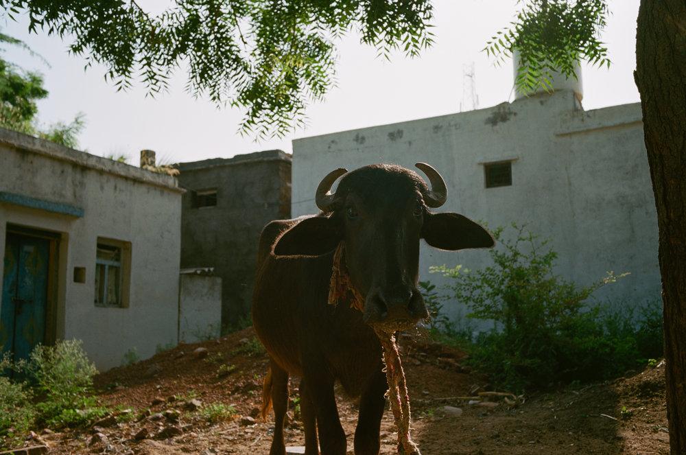 Jammalamadugu, India