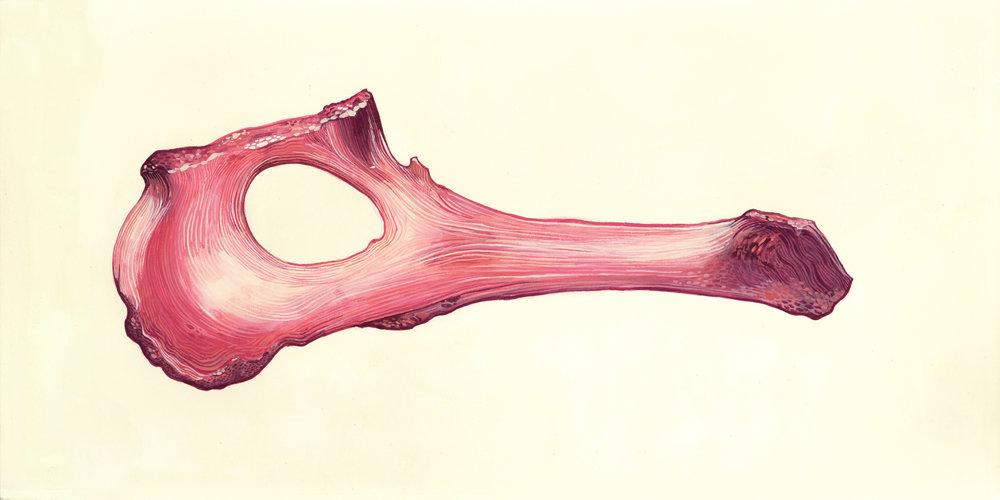 bone03.jpg