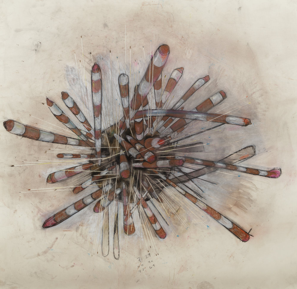 """Banded Sea Urchin"" , 2016  Charcoal, conte, chalk pencil on paper, 44 1/2""x44 1/2""  Courtesy Alana Roth & Carrie Able Gallery"