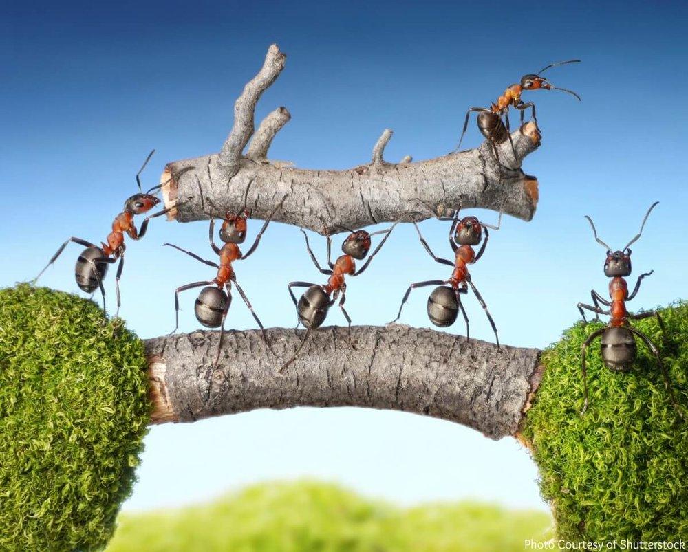 Our-Best-Life-Involves-Teamwork-Collaboration-C (1).jpg
