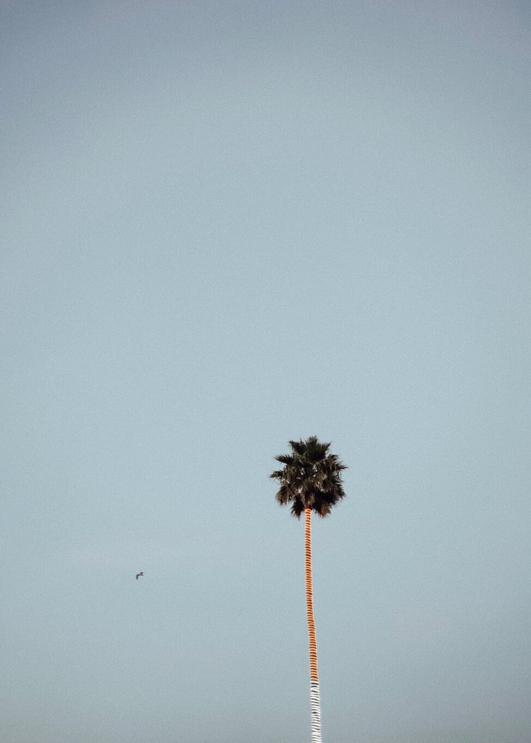 PALM_TREE_SANTA_CRUZ_CALIFORNIA.jpg