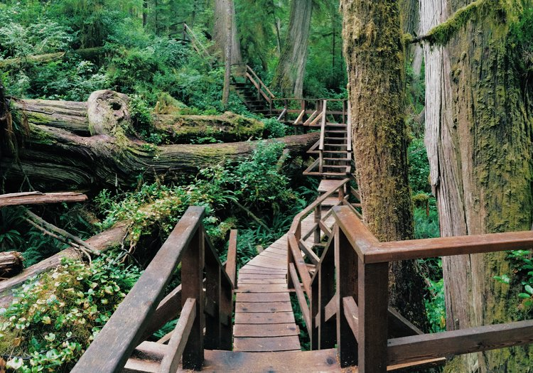TOFINO_BC_CANADA_RAINFOREST_WALK.jpg