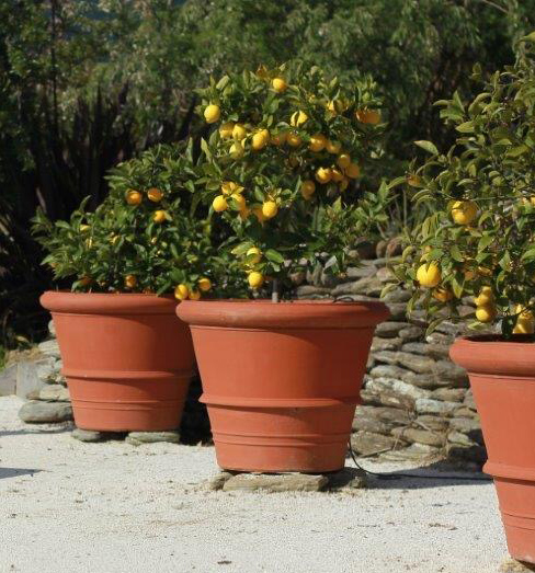 citurspots.jpg