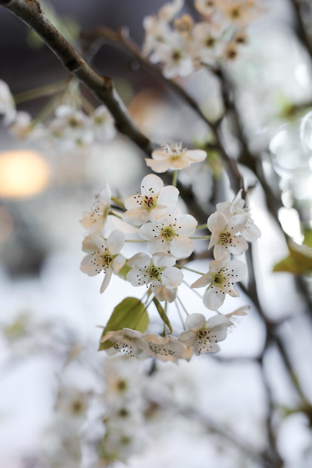 cherry-blossoms-at-weddings_pepper_nix_photography-38.jpg