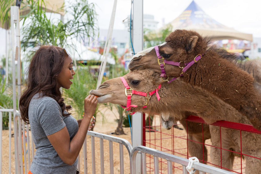Where else can you feed 7 month old camels? - Houston Rodeo