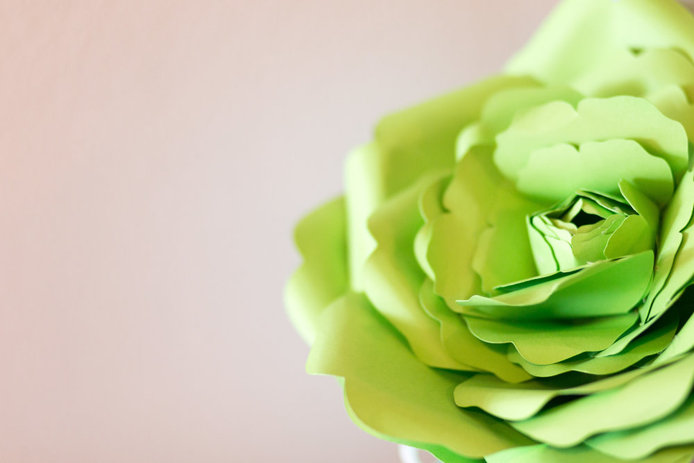 Paper Flowers by Alaan Studio