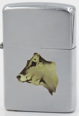 1950-51 T&C Zippo with a cow's head, most likely the Chianina breed