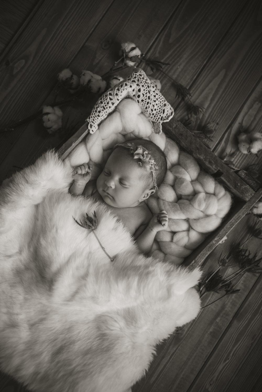 Laura Olson Photography - Nievelina - Newborns - Nova and Luna - December 2016-1502-2.jpg