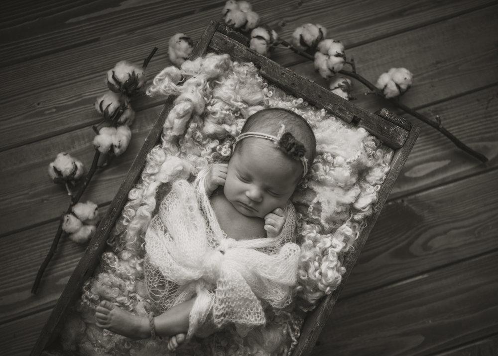 Laura Olson Photography - Nievelina - Newborns - Nova and Luna - December 2016-1580.jpg