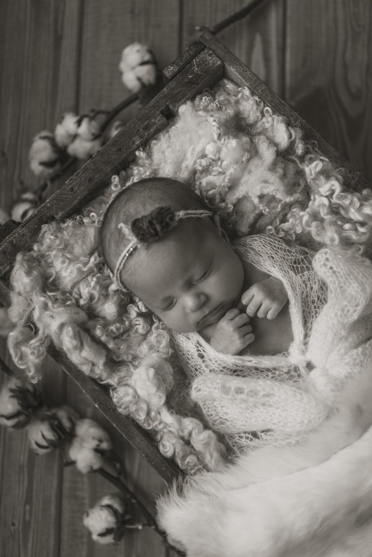 Laura Olson Photography - Nievelina - Newborns - Nova and Luna - December 2016-1588-2.jpg