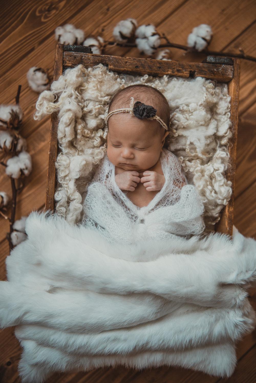 Laura Olson Photography - Nievelina - Newborns - Nova and Luna - December 2016-1585.jpg