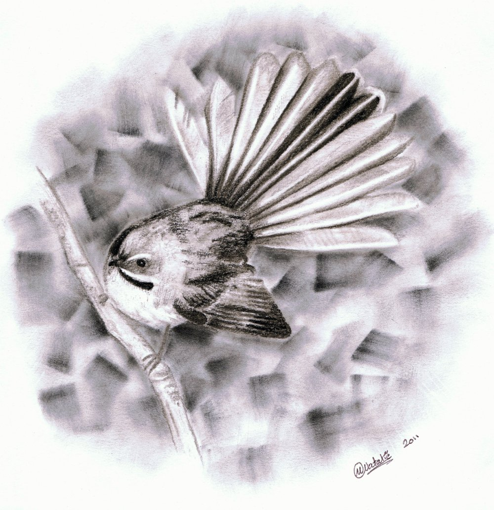 Fantail, charcoal