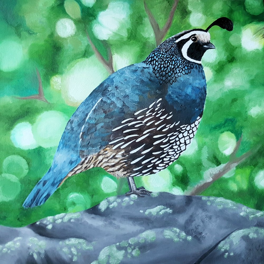 Californian quail, oil paint