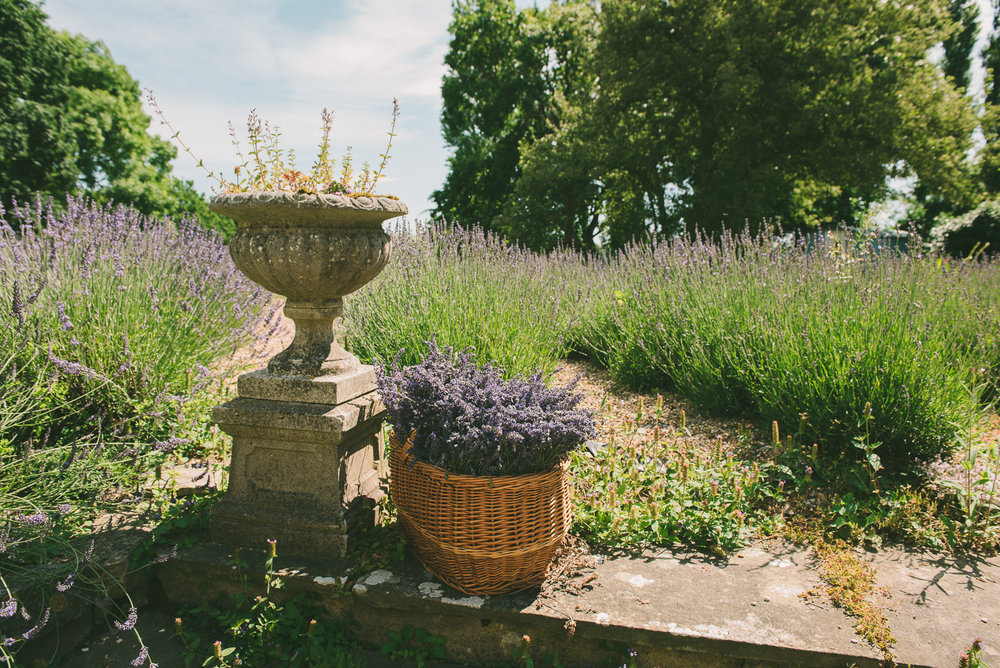 New Hall Lavender (9 of 99).jpg