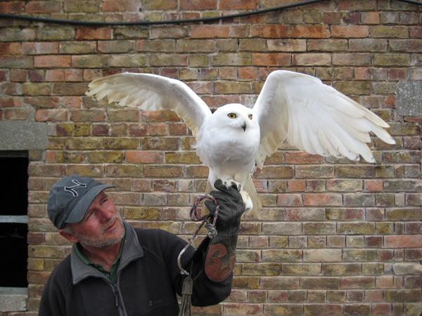 vince&owl