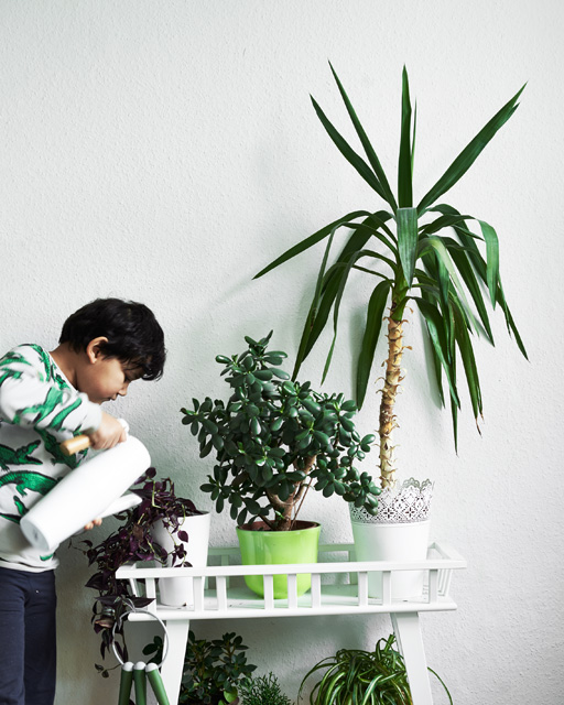 Watering plants in Ikea pots kids room
