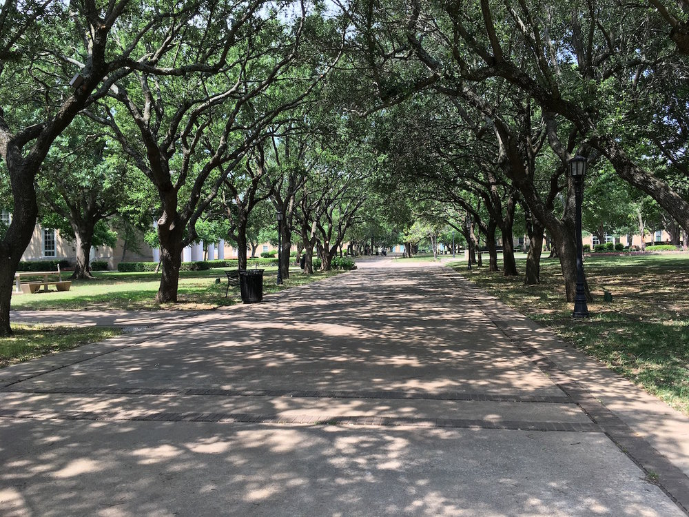 trees-austin-college.jpeg
