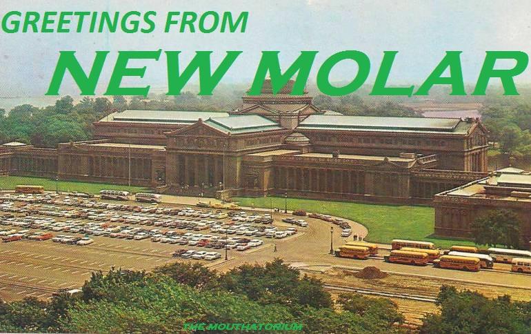 New Molar.jpg