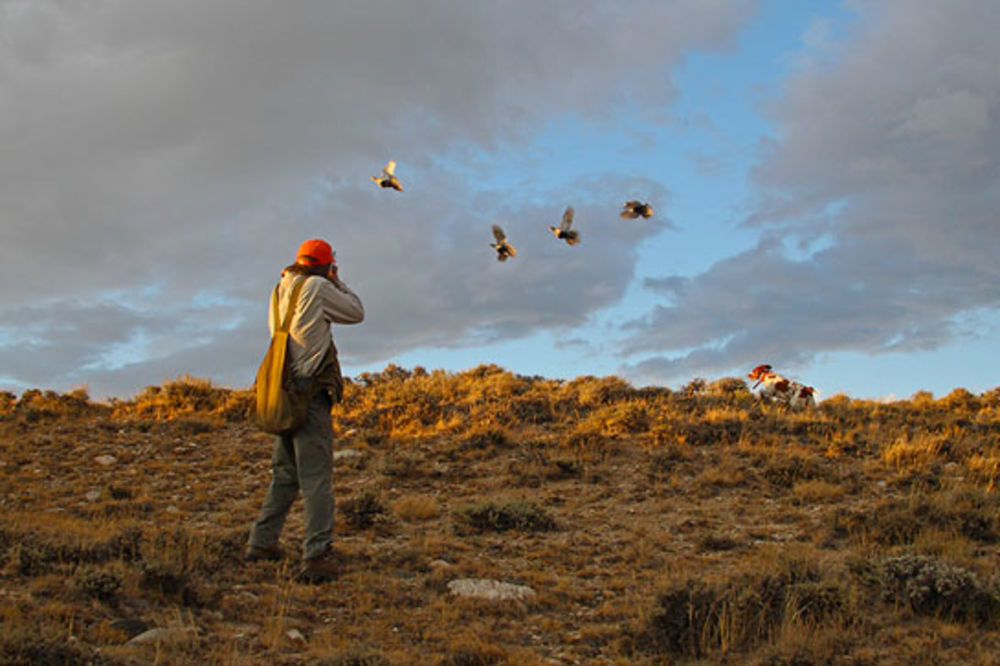 They know how to deal with sage grouse in wyoming, but in oregon? not so much