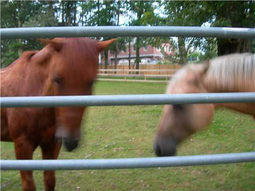 "Drunk horses, drunk photographer, or just a poor attempt at ""art""?"