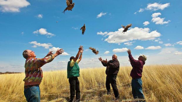 Fly away, little bird!