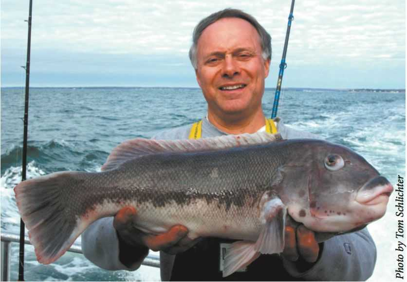 Now  this  is a legitimate black fish — larger than any I've ever caught, fo' sure (no, this is not the miscreant — I use the picture only to illustrate what a proper blackfish looks like)
