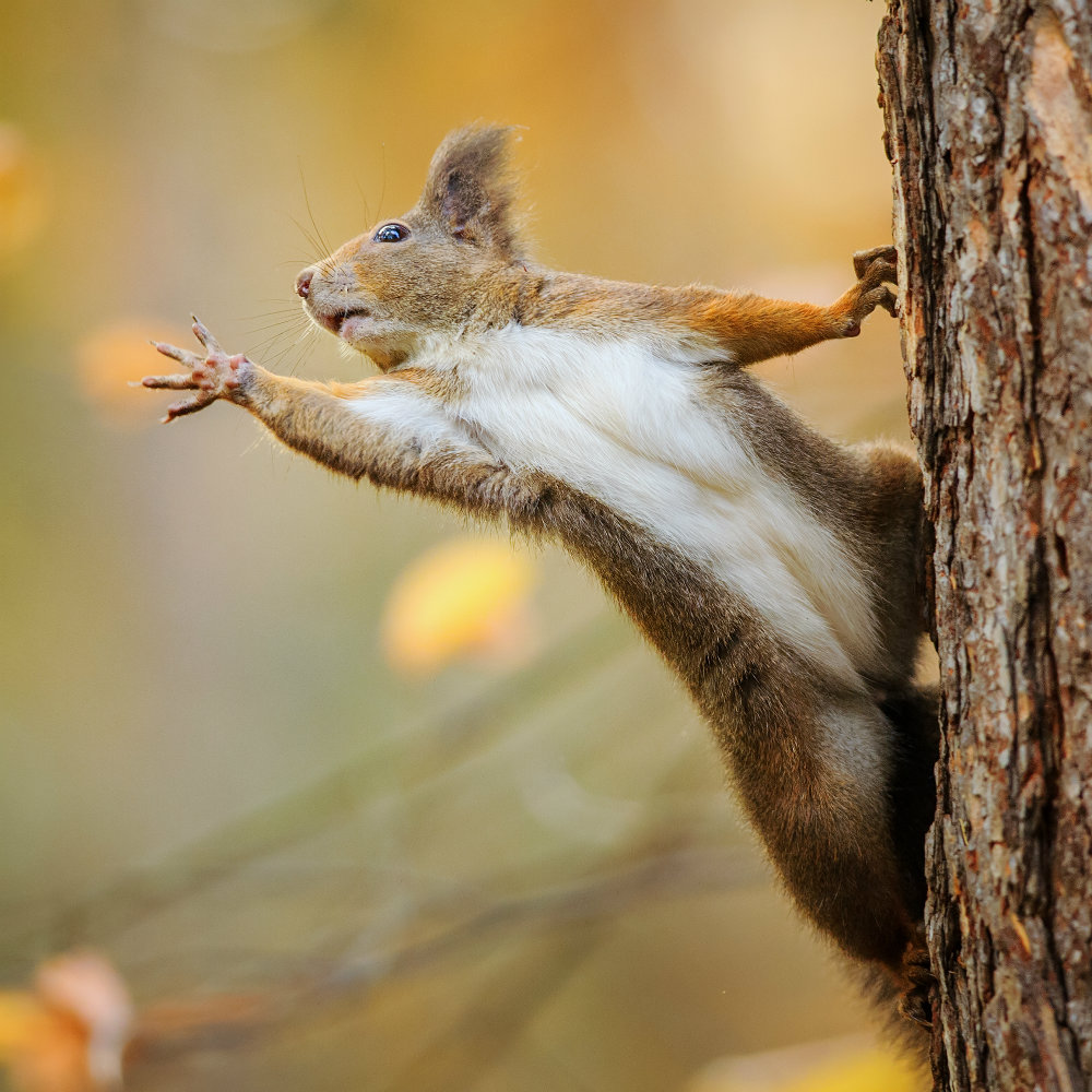 hey! Over here! Squirrel!